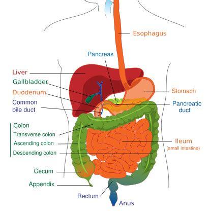 ceu for gastrointestinal disease picture 19