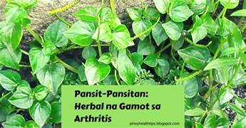 herbal na gamot sa rayuma picture 1