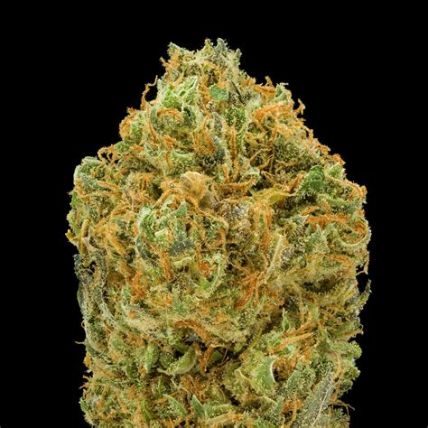 silver dollar weed medicine picture 17