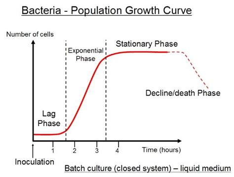 graph bacterial growth picture 7