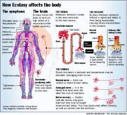 mdma effects on body picture 1