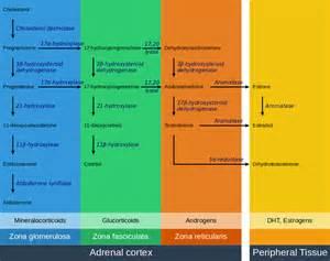 testosterone hormone wikipedia picture 7