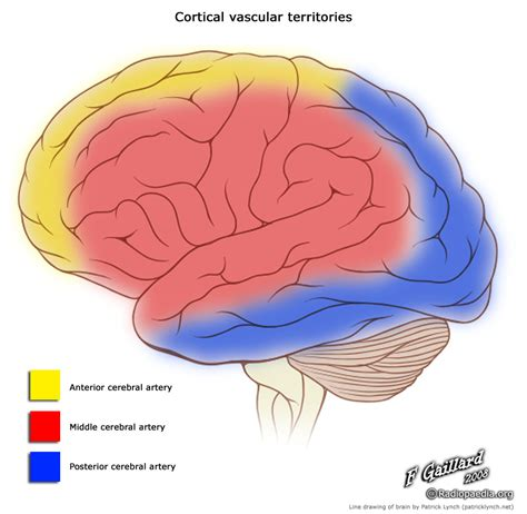 cerebral blood flow motor cortex picture 18
