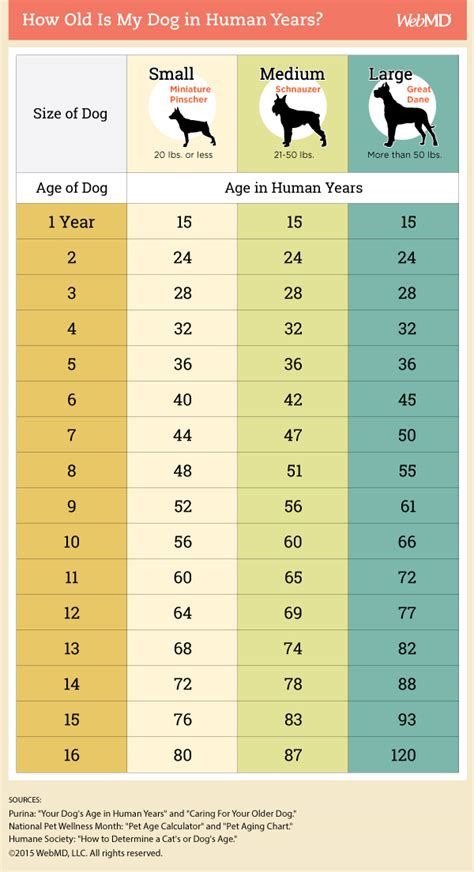 aging calculator picture 6