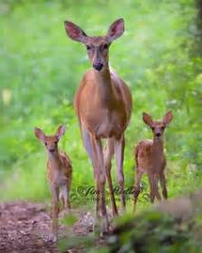 deer fawn s womans s picture 13