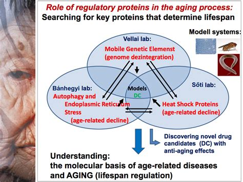 an aging protein picture 6