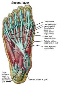 intrinsic muscle disease of the foot and ankle picture 10