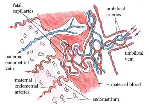 causes of decreased blood supply to placenta picture 1