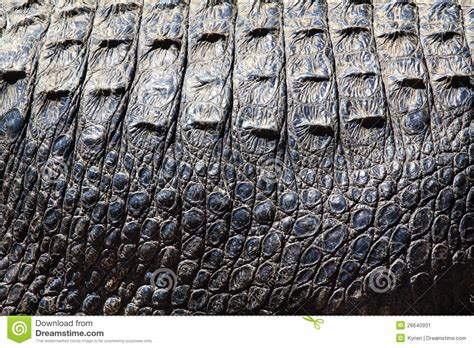 alligator skin on hands picture 9