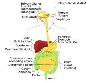 burning sensation in digestive tract picture 13