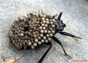 ants crawling on skin picture 10