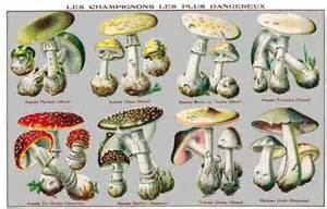 scientific names for fungi picture 1