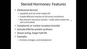 hormones picture 1