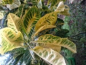 mga gamit ng aloe vera plant picture 5