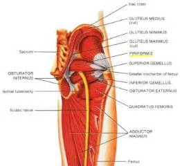 muscle bone and joint center picture 7