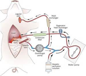 congestion blood circulation picture 7