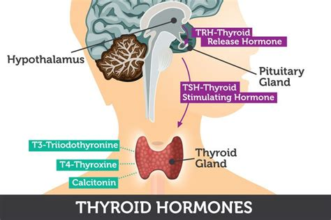can goiter grow on thyroid hormone picture 15