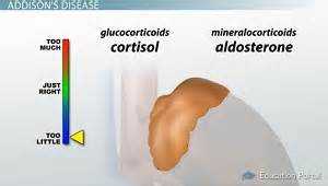 skin symptoms of adrenal disorders picture 14