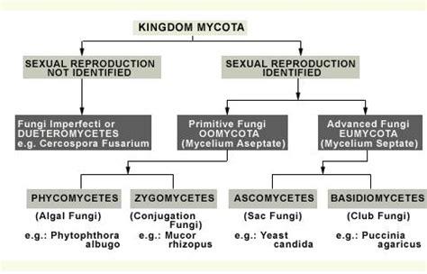 classified fungi picture 10