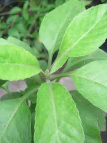 green coffee health benefits picture 11