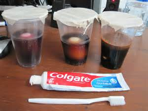 coke teeth science project picture 2