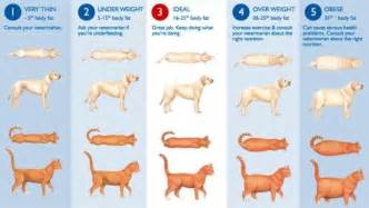feline weight loss picture 7