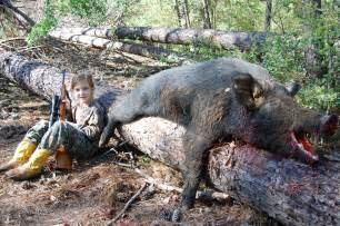 wild boar aging picture 14