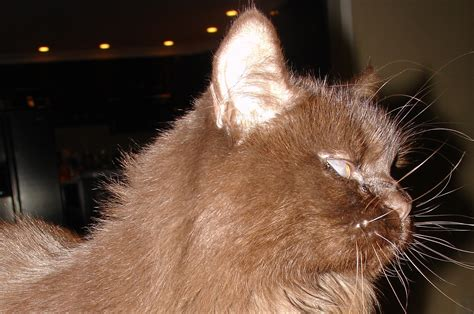 is feline herpes virus endemic to shelters picture 6
