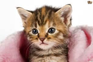 feline picture 1