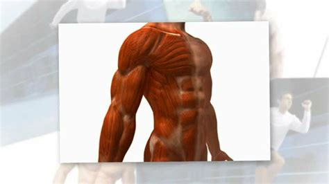sytropin muscle growth picture 5