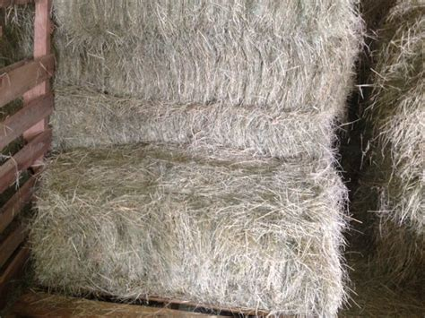 3 string alfalfa bales for wholesale in texas picture 7