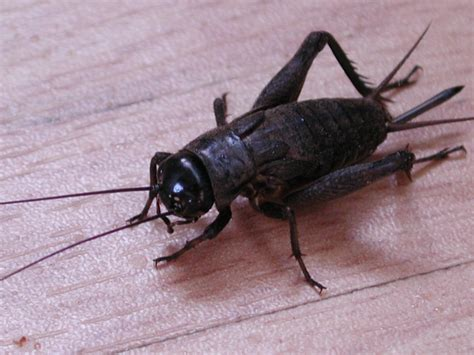 insect picture 19