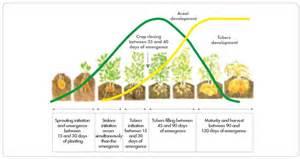 alfalfa nutrients picture 7