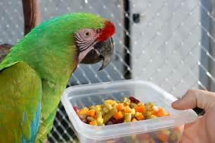 bird diet picture 1