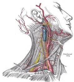 body position for thyroidectomy picture 1