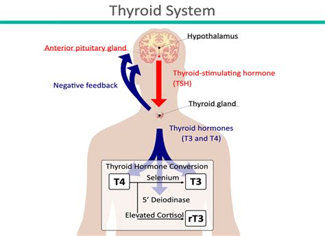 anxiety and hypothyroidism picture 5