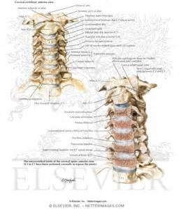 facet degenerative joint disease picture 10