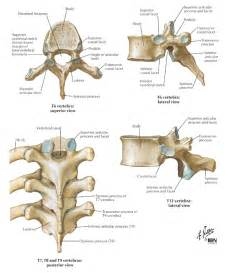 the curve for joint pain picture 3