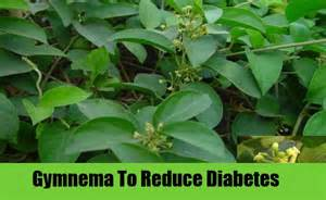 ayurvedic cure from kadamba tree extract for diabetes picture 6