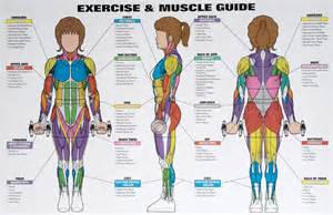 exercise for muscle picture 2