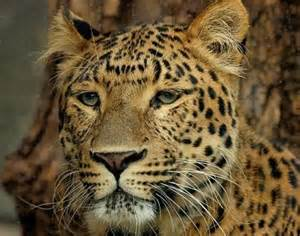 lleopard skin picture 11