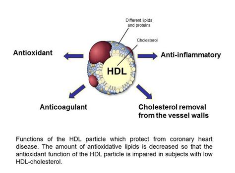 Extremely low cholesterol picture 1