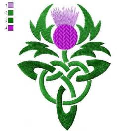 canadian thistle picture 5