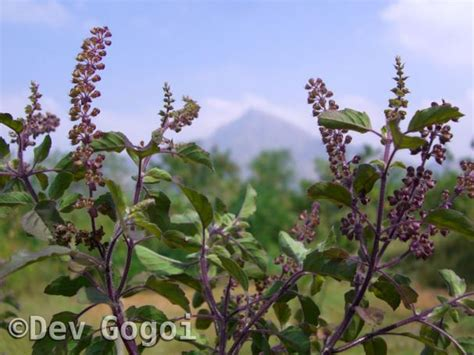 herbal database picture 3
