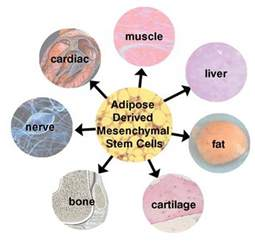 stem cells hair picture 15