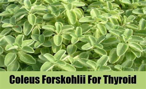 forskohlii thyroid picture 1