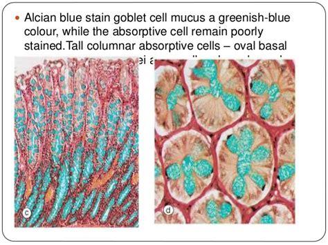 colon contactions picture 3