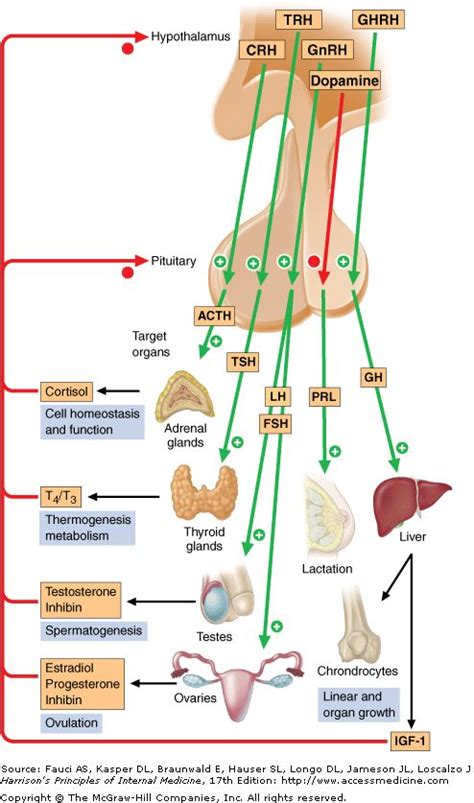 anterior pituitary hyperhormonotrophic syndrome symptoms picture 13