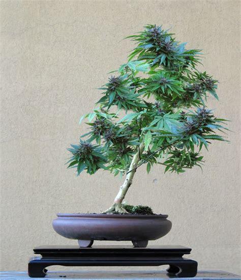 different ways to smoke marijuana picture 5