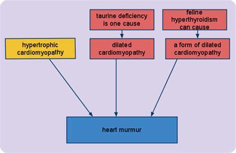 feline hyperthyroid heart murmur picture 17
